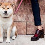 Cestfini – Zapatos elegantes invierno 2017